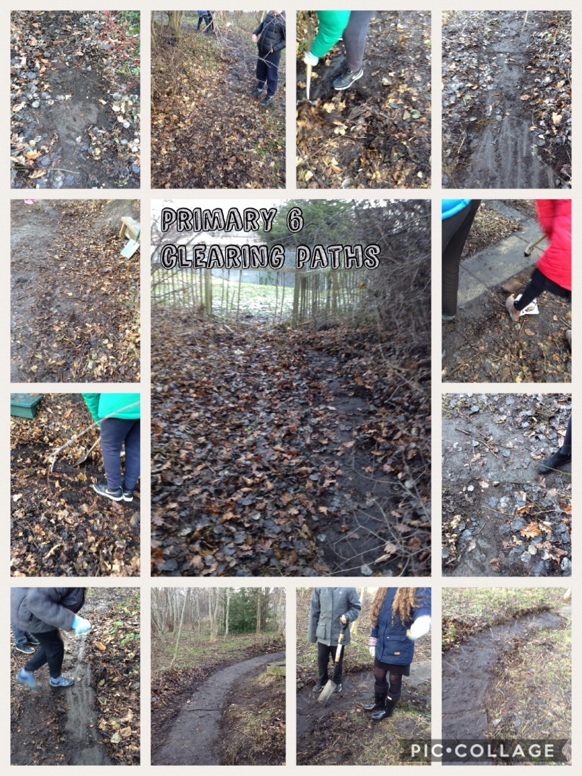 P6A Path Clearing